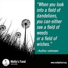 Image obtained from Mollysfund.org